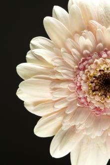 NLP Flowers 260113 130