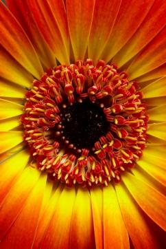 NLP Flowers 260113 266