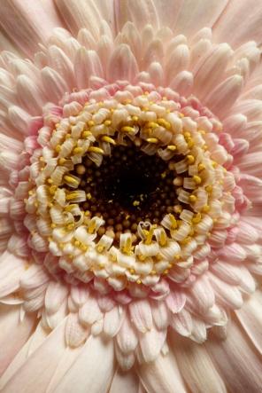 NLP Flowers 260113 268