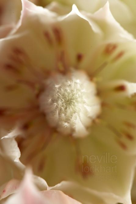 NLP Flowers 051013 015