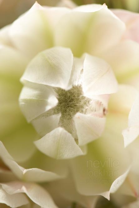 NLP Flowers 051013 026