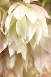 NLP Flowers 051013 030