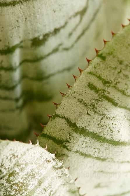 Urn Plant Plant